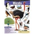 Trend Enterprises® Exploring Birds Learning Chart