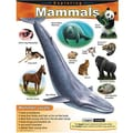 Trend Enterprises® Exploring Mammals Learning Chart