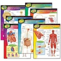 Trend Enterprises® The Human Body Learning Chart
