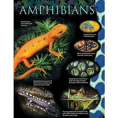 Creative Teaching Press™ Amphibians Animal Classification Chart