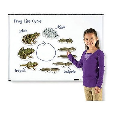 Learning Resources® Giant Magnetic Frog Life Cycle