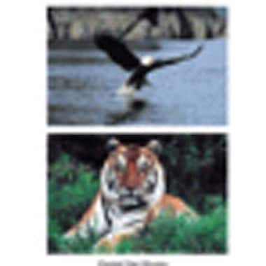 Stages Learning Materials® Poster Set, Wild Animal