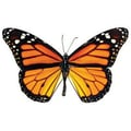 Trend Enterprises® Pre Kindergarten - 9th Grades Classic Accents, Monarch Butterfly