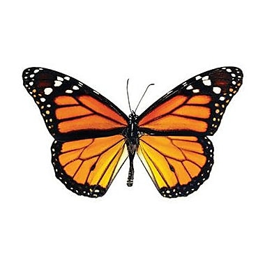 Trend Enterprises® pre-kindergarten - 9th Grades Classic Accents, Monarch Butterfly