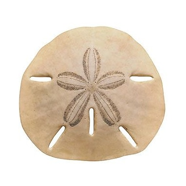 Trend Enterprises® pre-kindergarten - 9th Grades Classic Accents, Sand Dollar
