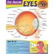 Trend Enterprises® Our Amazing Eyes Learning Chart