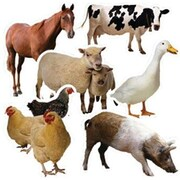 "Edupress EP3112 6"" x 8"" DieCut Farm Animals Bulletin Board Accents, Multicolor"