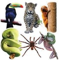 Edupress® Toddler - 6th Grades Bulletin Board Accents, Rain Forest Animals
