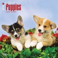 2014 I Love Puppies Wall Calendar, 12in. x 12in.