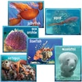 Edupress® Pre School - 6th Grades Instructional Accents, Ocean