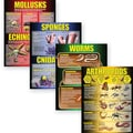 McDonald Publishing® Poster Set, Invertebrates