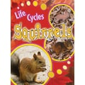 Teacher Created Resources® Life Cycles Squirrels Book