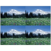 MAP Brand Scenic Laser Postcards Mountain Meadow Scene