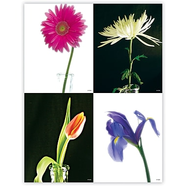 MAP Brand Scenic Assorted Laser Postcards Flowers
