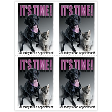 MAP Brand Photo Image Laser Postcards Labrador and Kitten, It's Time