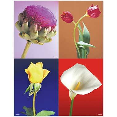 MAP Brand Scenic Assorted Laser Postcards Photo Flowers
