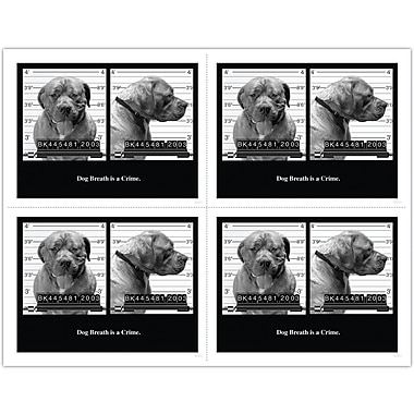 MAP Brand Humorous Laser Postcards Dog Breath is a Crime!