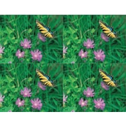 MAP Brand Scenic Laser Postcards Butterfly/Flower
