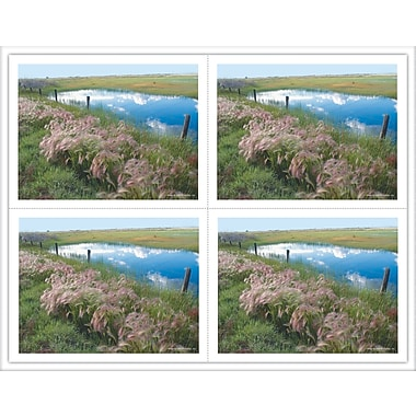 MAP Brand Scenic Laser Postcards Pasture/Pond