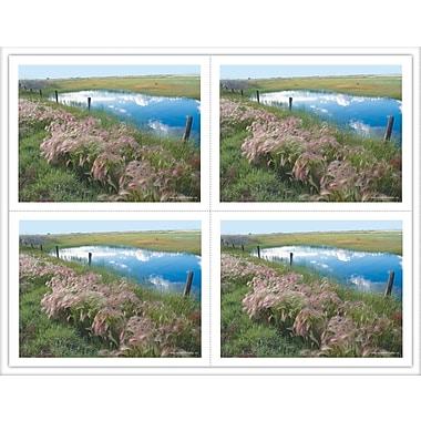 MAP Brand Scenic Laser Postcards Pasture/Pond