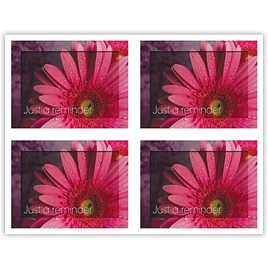 MAP Brand Scenic Laser Postcards Pink/Daisy