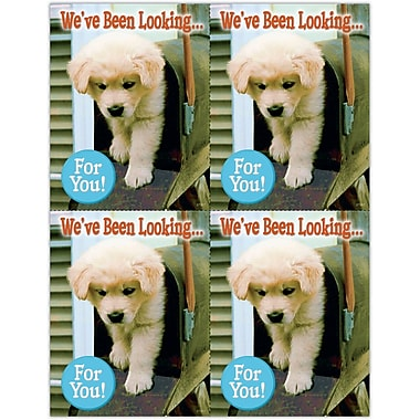 MAP Brand Photo Image Laser Postcards Dog in Mailbox