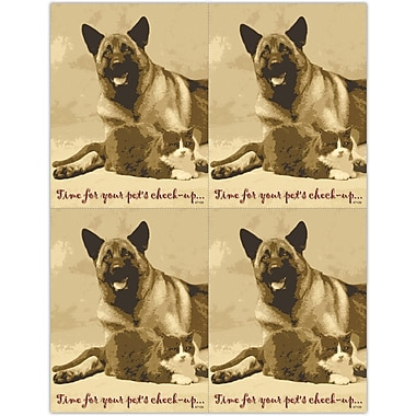 MAP Brand Photo Image Laser Postcards Time for Pet's Check-up