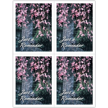 MAP Brand Scenic Laser Postcards Flowering Tree,