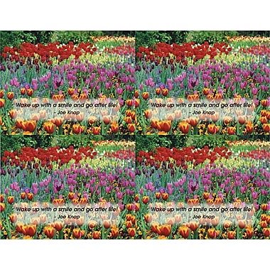 MAP Brand Scenic Laser Postcards Tulip Field