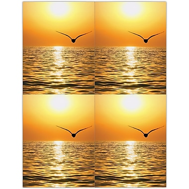 MAP Brand Scenic Laser Postcards Scenic Seagull Sunset