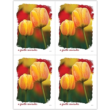 MAP Brand Scenic Laser Postcards Tulips