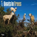 2015 BrownTrout Publishers Goats in Trees Monthly Wall Calendar, 12in. x 12in.