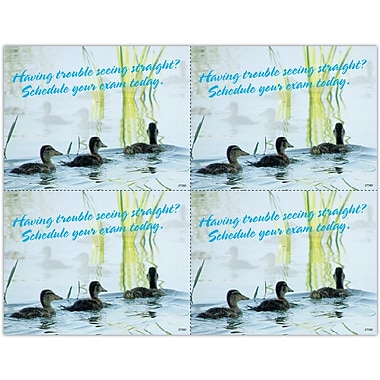MAP Brand Photo Image Laser Postcards Three Ducklings