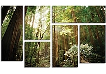 Ariane Moshayedi 'Muir Woods' Gallery-Wrapped Canvas Art, 6-Panel Set