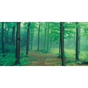 "Biggies- Wall Mural- Misty Forest 54"" x 27"""