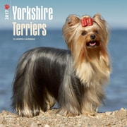 2017 Yorkshire Terriers Square 12x12