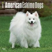 2017 American Eskimo Dogs Square 12x12