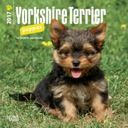 2017 Yorkshire Terrier Puppies Mini 7x7(09781465053831)