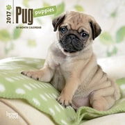 2017 Pug Puppies Mini 7x7