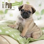 2017 Pug Puppies Mini 7x7