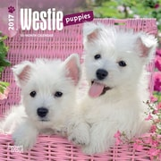 2017 West Highland White Terrier Puppies Mini 7x7