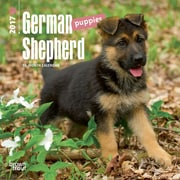 2017 German Shepherd Puppies Mini 7x7