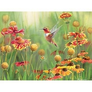Outset Media Games Rufous Hummingbird 500 piece Puzzle (GC20848)