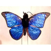 Sunny Toys 14 In. Butterfly - Butterfly Blue Morpho, Animal Puppet (SNTY411)