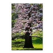 "Trademark Fine Art Kurt Shaffer 'Spring Magnolia' 12"" x 19"" Canvas Stretched (190836001279)"