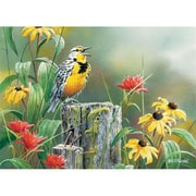 Outset Media Games Meadowlark Morning 1000 piece Puzzle (GC16803)