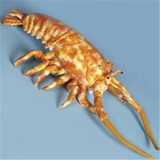 Sunny Toys 18 In. lobster - Rock, Animal Puppet (SNTY357)
