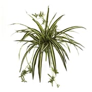 """Nearly Natural Spider Plant Bush 23"""" Green (6118-S4)"""