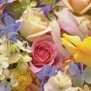 "Shamrock 24""W Floral Medley Gift Wrap, Purple/Yellow/Pink/Green/White"