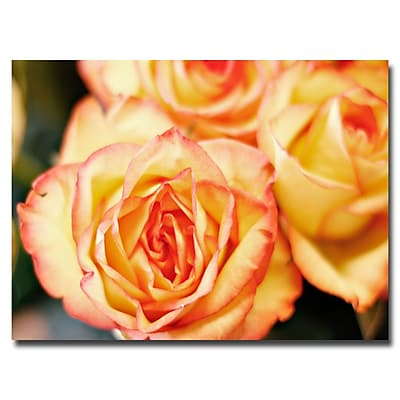 Trademark Fine Art Araine Moshayedi 'Roses' Canvas Art 243683